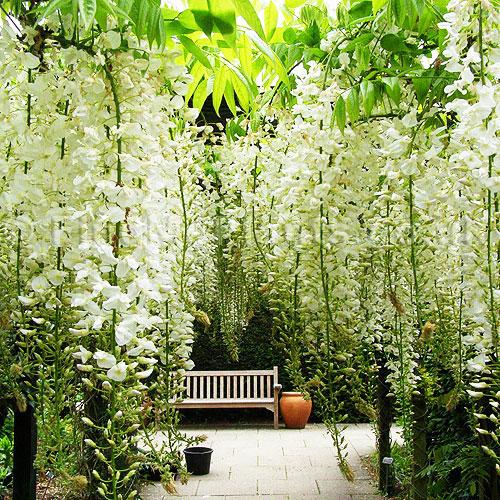 唯美花园布置效果图