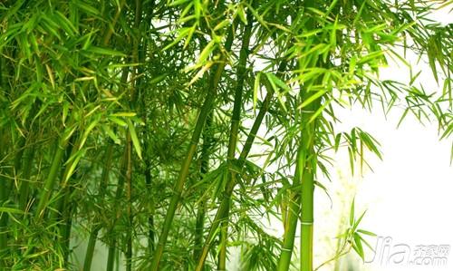 竹子与松,梅,构成