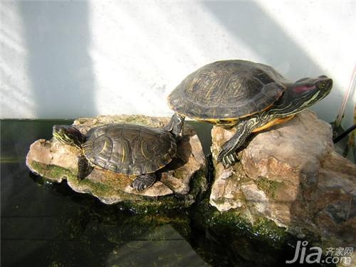 乌龟冬天怎么养 乌龟冬天养殖方法