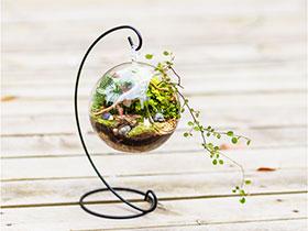 微景觀大世界 13款創意綠植推薦