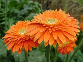 吸甲醛最好的方法 吸收甲醛的植物有哪些