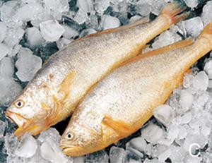 小黄鱼的营养价值