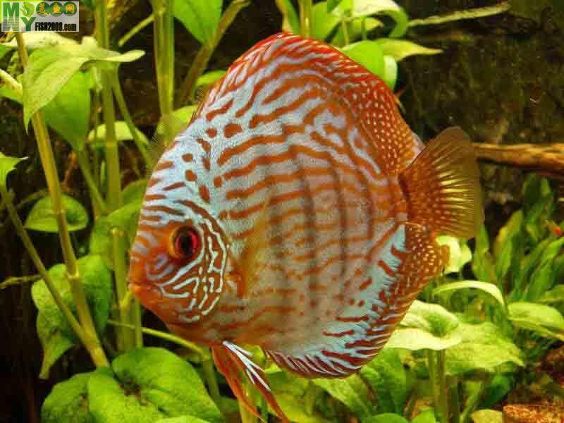 壁纸 动物 鱼 鱼类 800_600