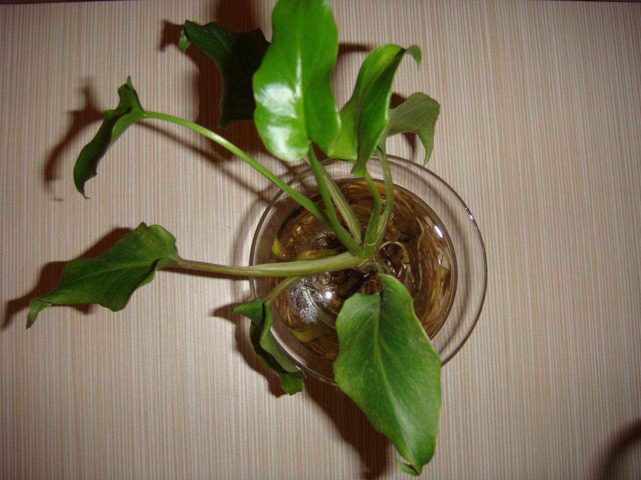 水养植物有哪些比较好养的