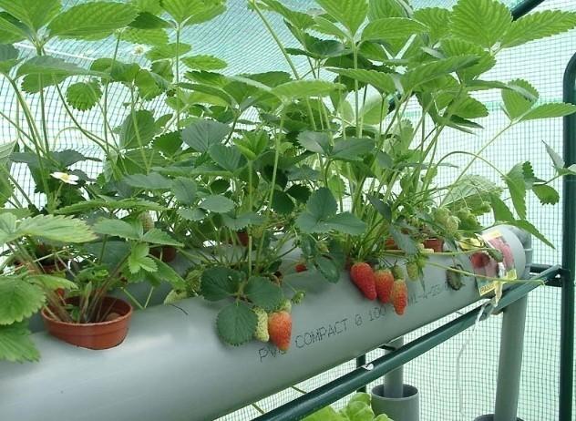阳台种菜用什么盆好 教你正确种植