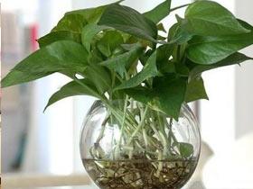 什么植物吸甲醛 吸附甲醛最好的植物推荐