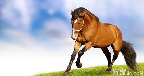 与马相配的属相 属马的性格图片