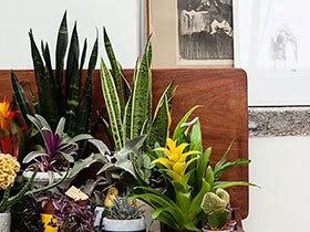 11个家居植物摆放效果图 把森林带进家