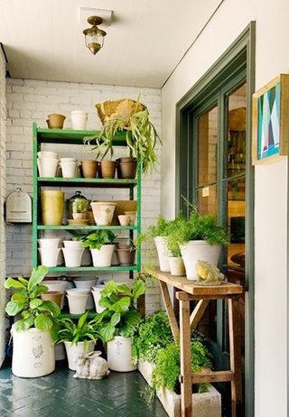 绿色植物花架摆放图片大全