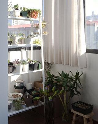56㎡一居室阳台实景图