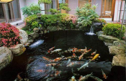 鱼池过滤器图片