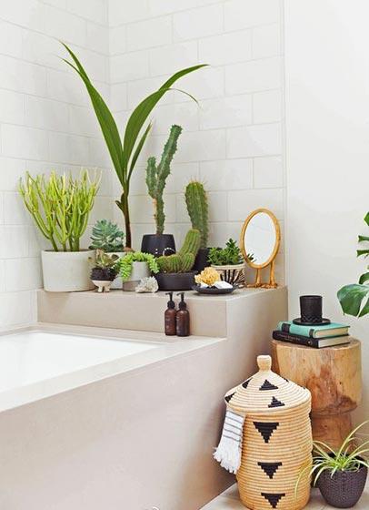 家居植物搭配装修效果图