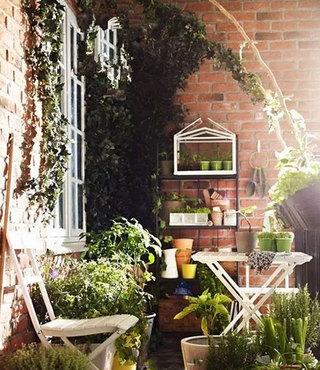 室内植物装修效果图片