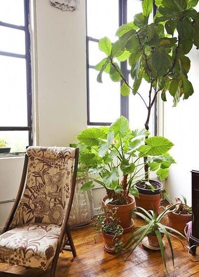 阳台绿色植物摆放图