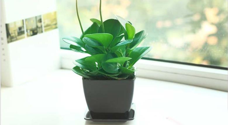 家里养什么植物好 客厅要养什么植物