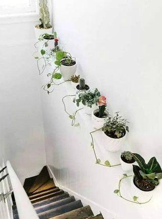 室内植物背景墙图片大全