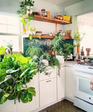厨房植物布置图片大全