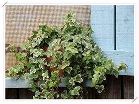 吸甲醛最好的植物排行 用植物去甲醛真的有用吗