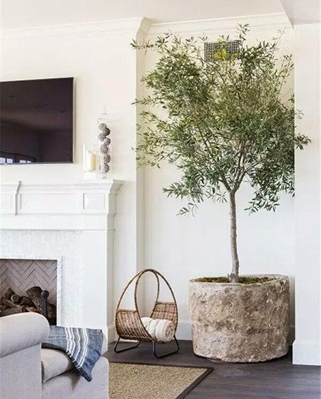 客厅装修室内植物图