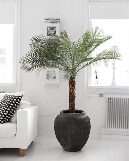 客厅装修室内植物布置图