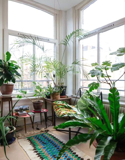 客厅室内植物摆放效果图