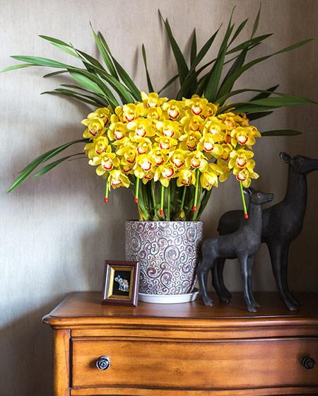 135平简美风格装修室内植物图片