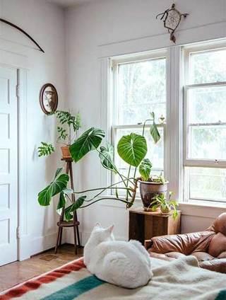 室内植物摆件设计构造图
