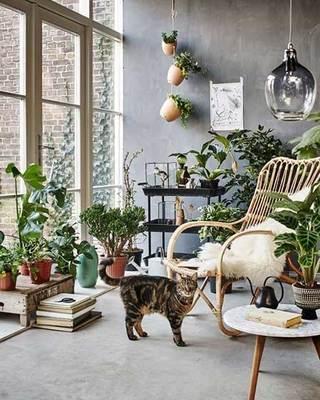 室内植物摆件设计参考图