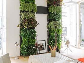 大大绿色森林  10款植物背景墙装修图