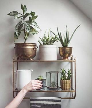 室内植物摆放图片大全