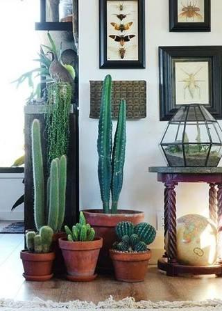 室内植物摆放设计欣赏图