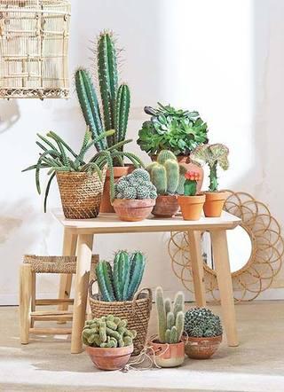 室内植物摆放设计装饰图