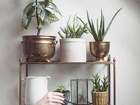 家庭深呼吸  10款室内植物摆放图片
