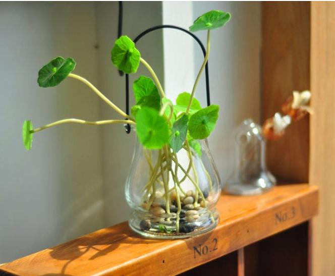 """绿意满屋 水培植物为你的小屋""""降降温"""""""