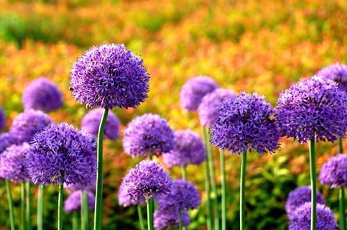 春天开的花有哪些 春天开的花为什么这么多
