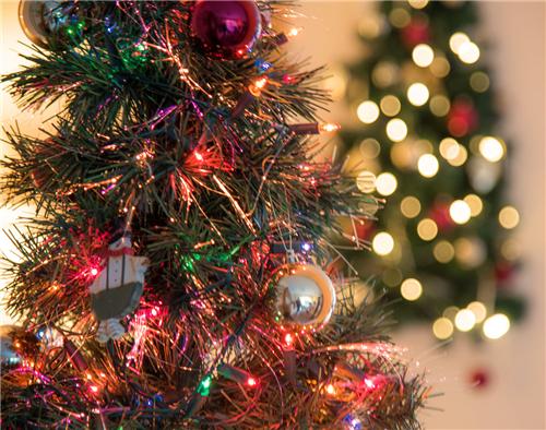七彩圣诞树自制步骤 怎么让圣诞树开花