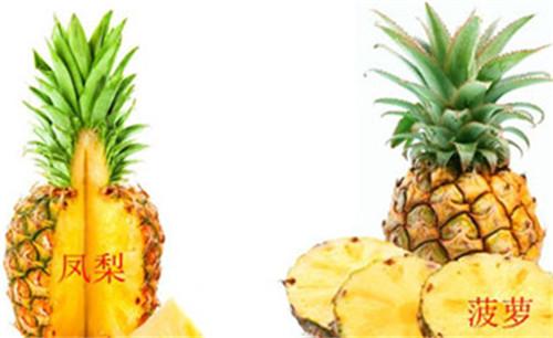 凤梨是菠萝吗 凤梨与菠萝哪个更好吃