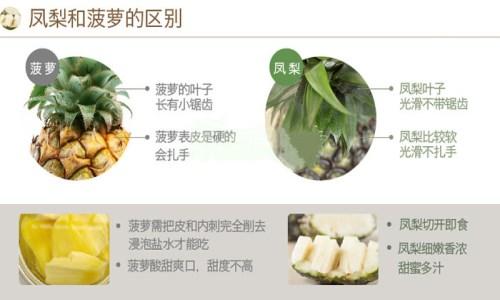 凤梨与菠萝的区别是什么 凤梨和菠萝有哪些营养价值