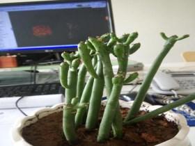 什么植物防辐射 四种防辐射最好的植物