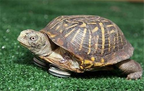 乌龟喜欢吃什么 乌龟怎么养长得快