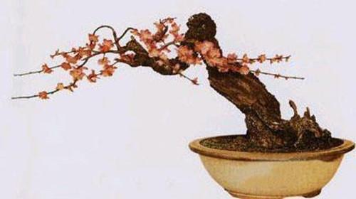中国盆景有哪些品种 名贵盆景树种排行榜