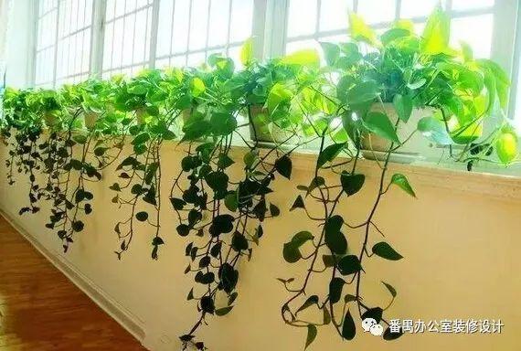 办公室装修设计中用什么绿植点缀空间?