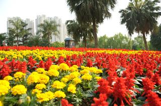 花卉公园图片