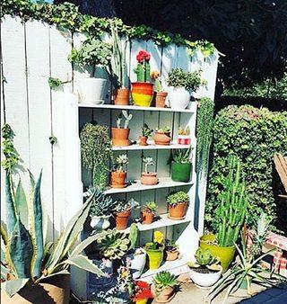庭院植物设计实景图