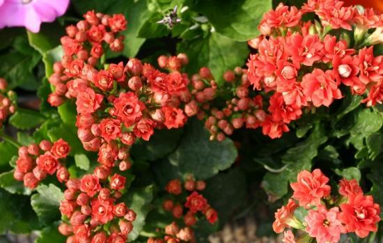 冬季里最耐寒的15种花卉,养得好花能一直开到年后5月份!