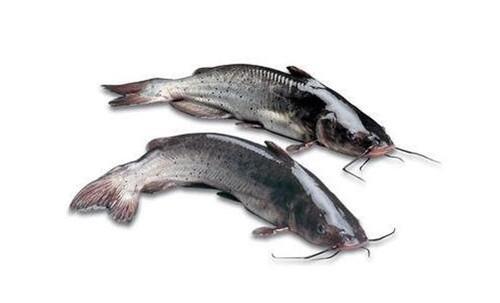 回鱼的营养价值